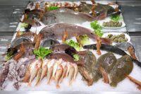 philosofy-seafood